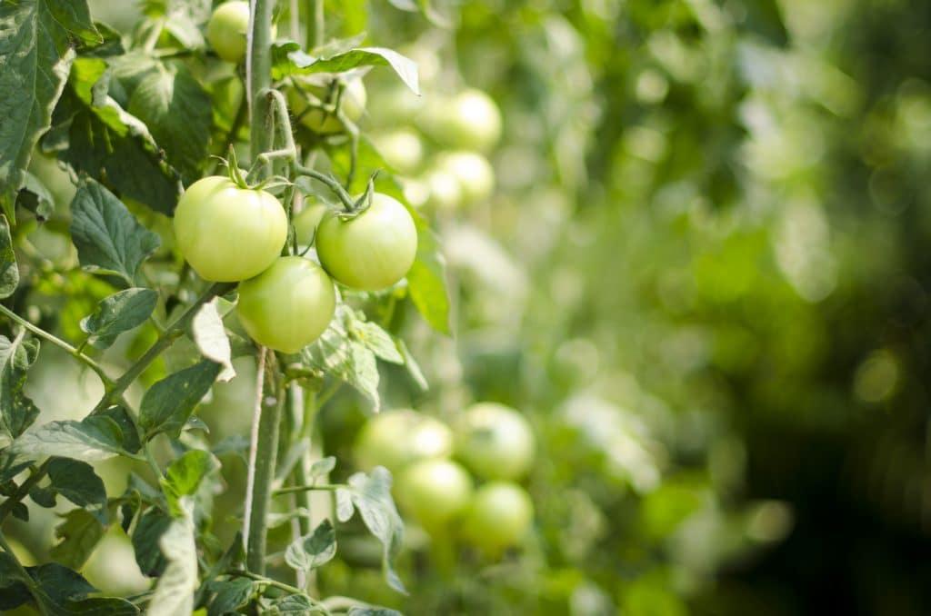 La nourriture actuelle est souvent ultra-transformée et pleine de pesticide, ce qui ralentit la détox naturelle